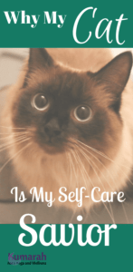 cat, self care, taking care of needs, pets, cats