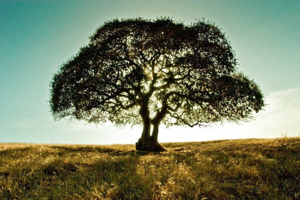 the great kapok tree, kids yoga lesson plan
